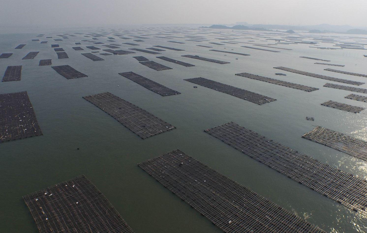 Рыбные фермы в г. о. Циньчжоу, Гуанси-Чжуанском АР.