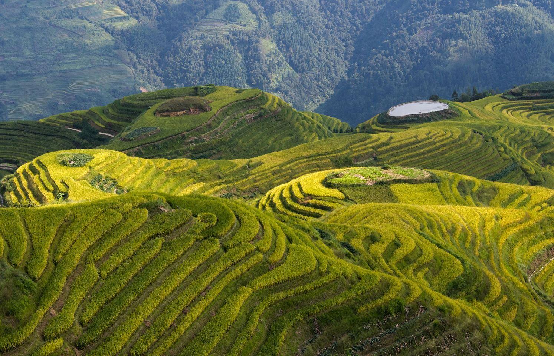 Рисовые террасы в пр. Гуанси.
